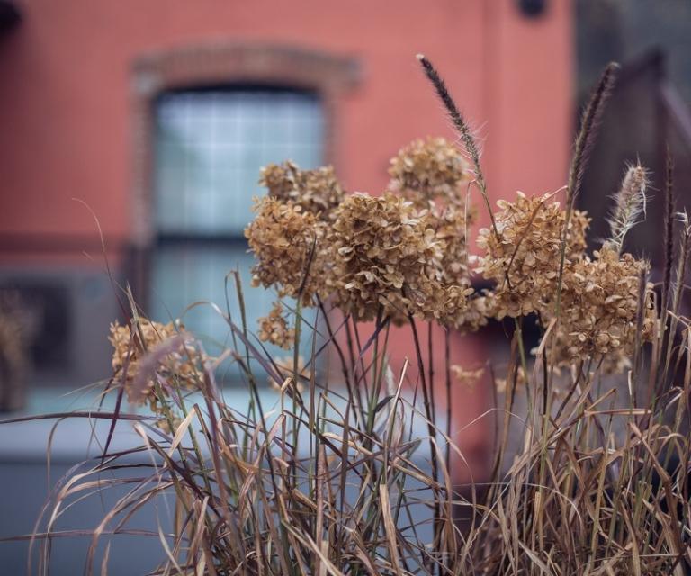 Le stagioni in Fabbrica Saccardo